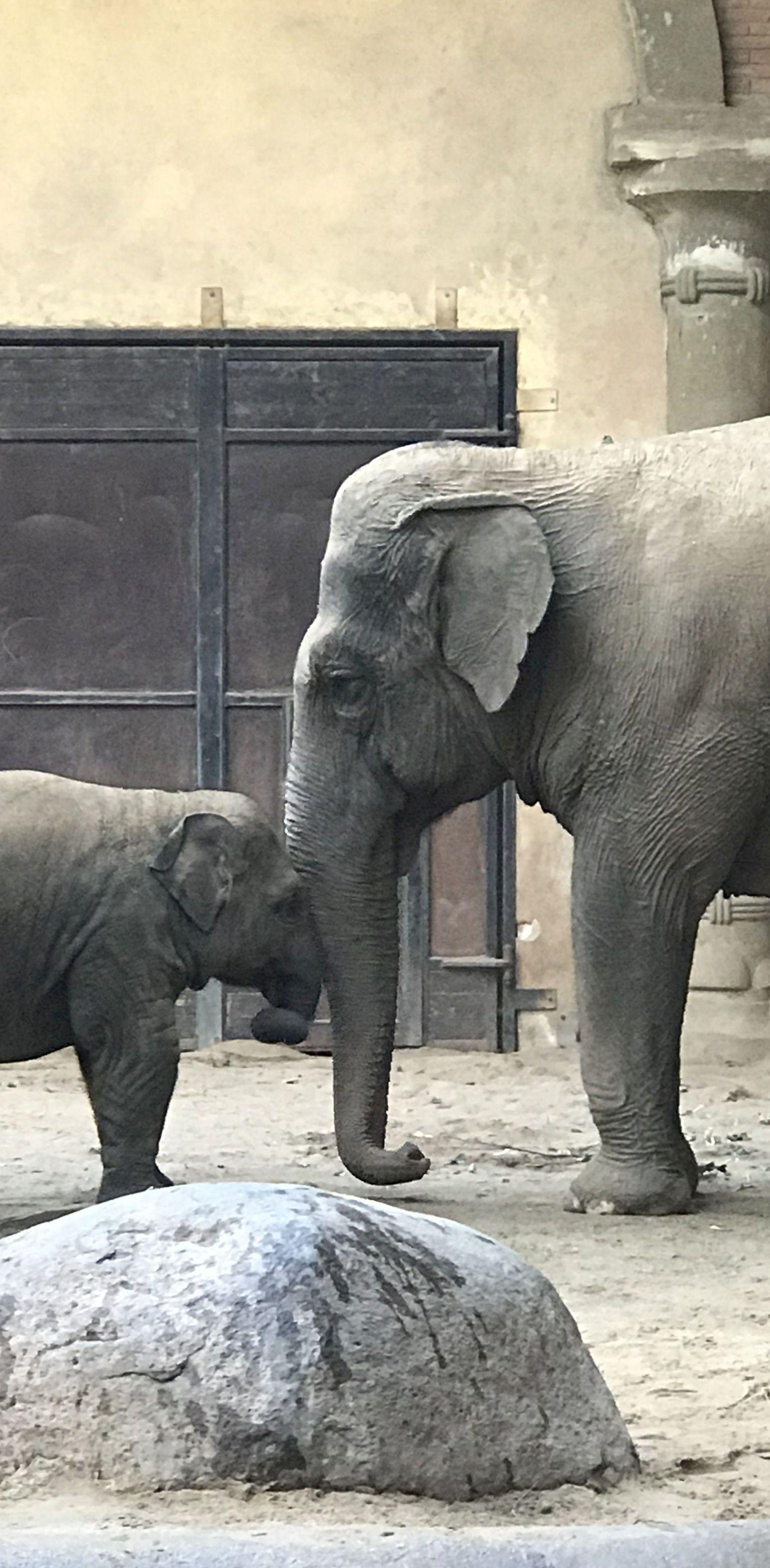 Elefanten groß2